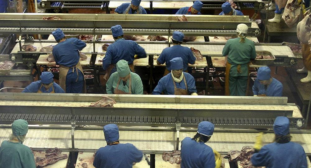 Работа предприятия по производству мяса индейки ООО Евродон