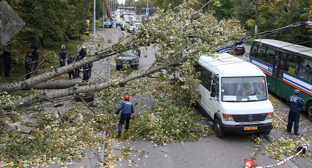 Ликвидация последствий штормового ветра