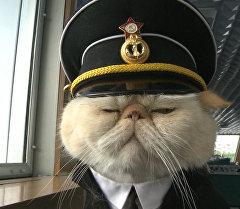"""Хвостатый экипаж, или Как коты в форме """"служат"""" на корабле и ходят в море"""