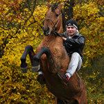 Скачки на лошадях
