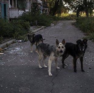 Бездомные собаки.