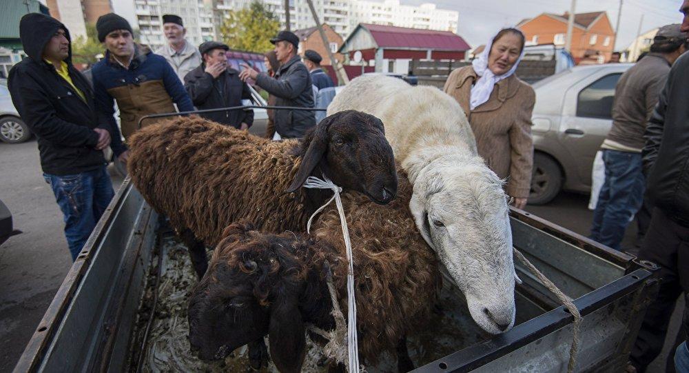 Фонд Кадырова раздаст 60 тысяч овец исотню верблюдов малоимущим