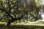 Молитвенное дерево