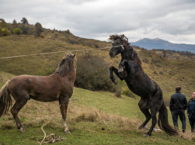 Лошади Скачки Южная Осетия