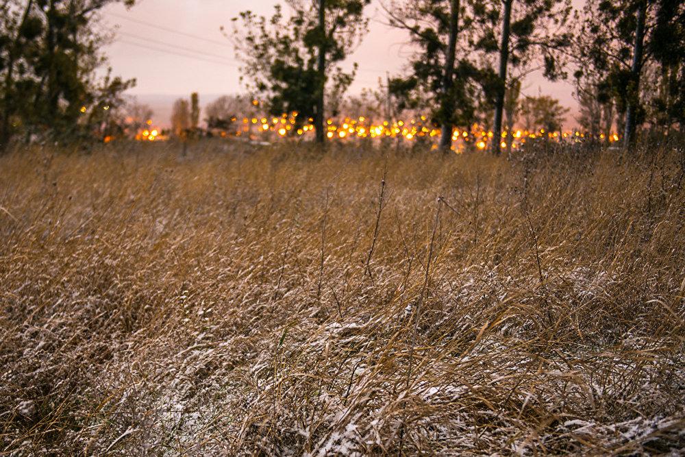 На асфальт снег так и не лег, но траву припорошил.