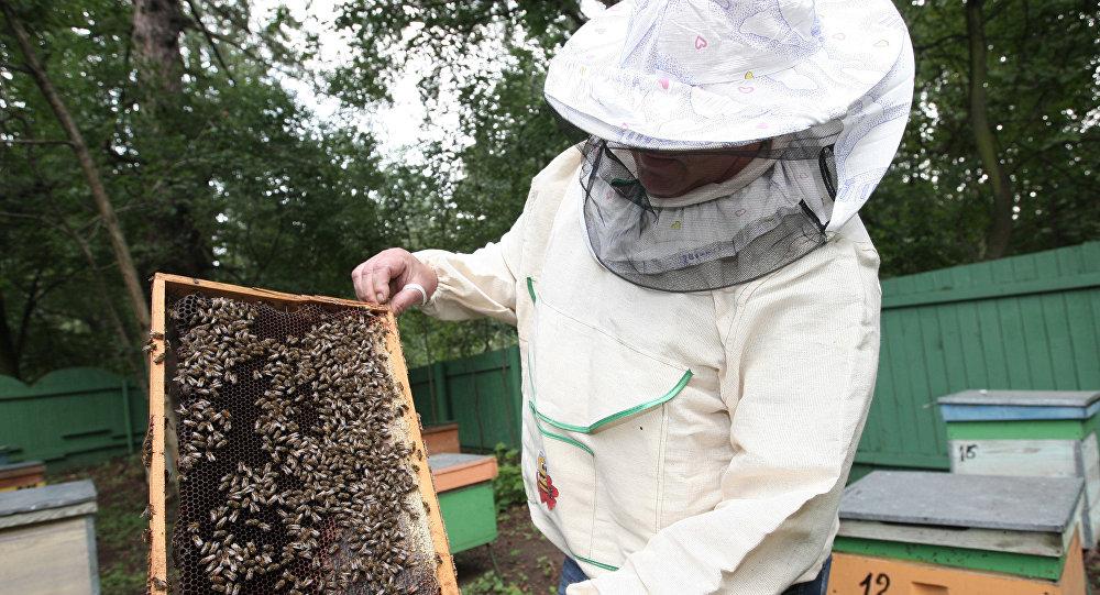 Пчеловод
