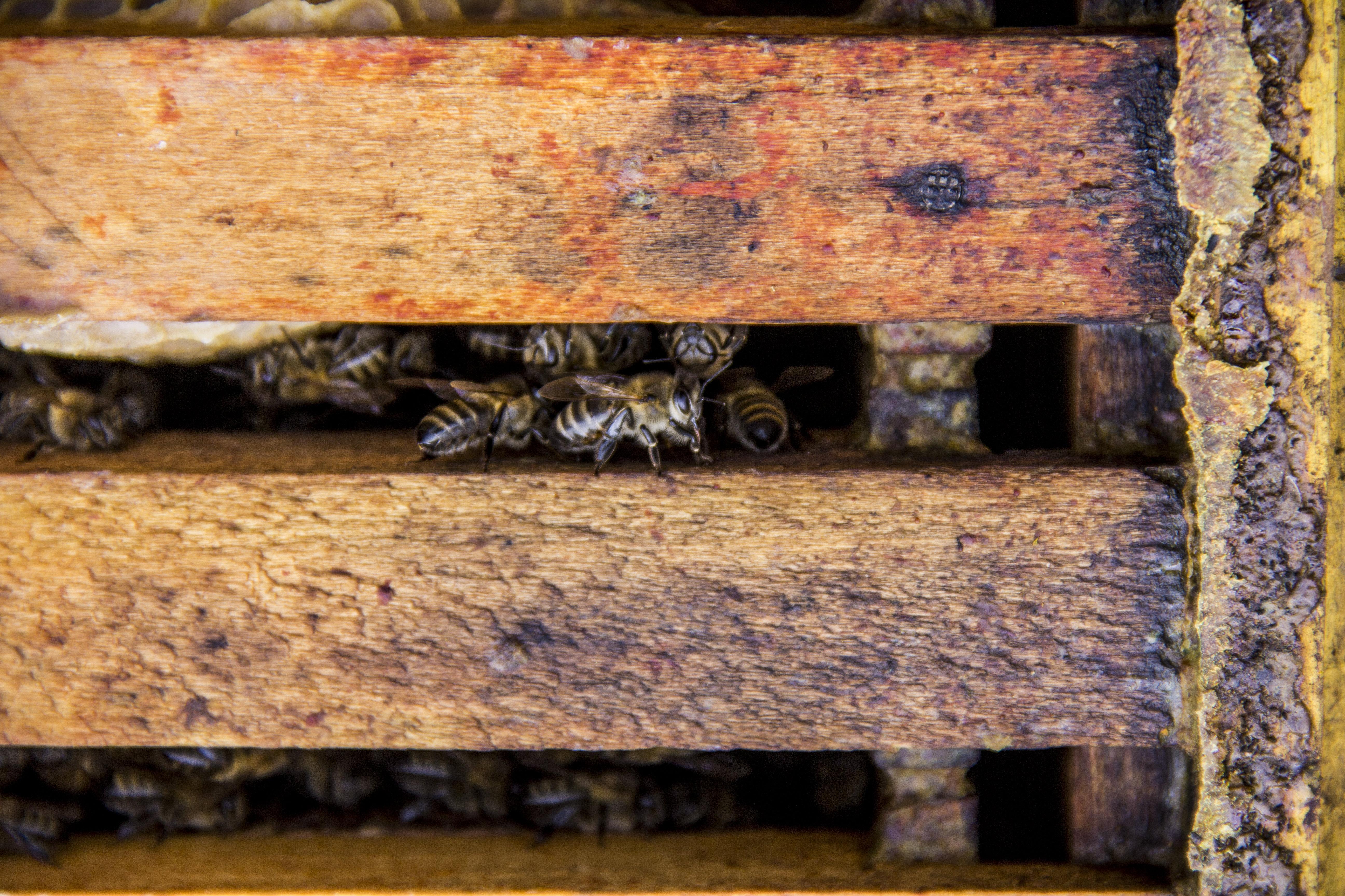 Пчеловодство в с.Прис