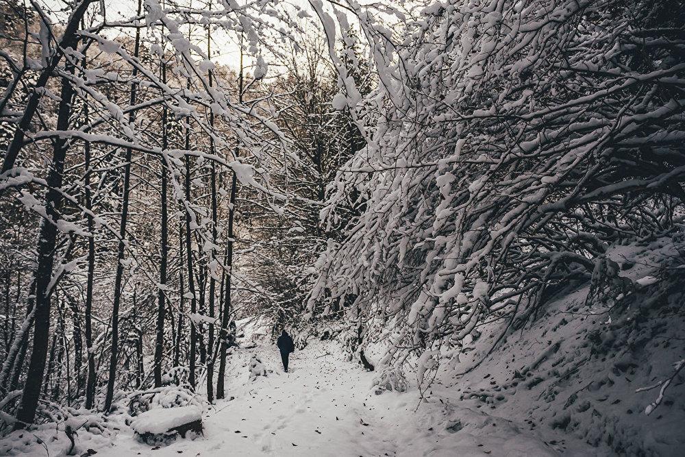 Проселочные дороги, тропинки в лесу занесены снегом.