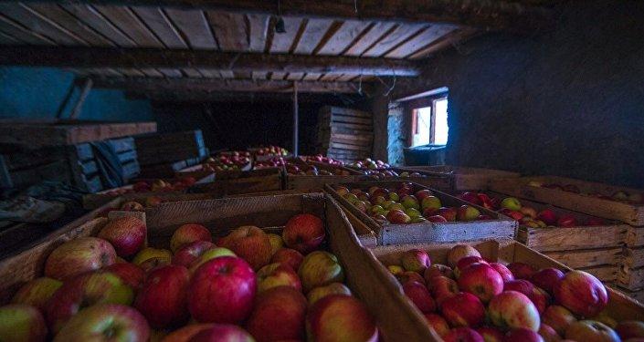 Яблоки Сатикар