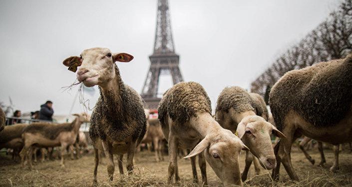 Протесты французских фермеров