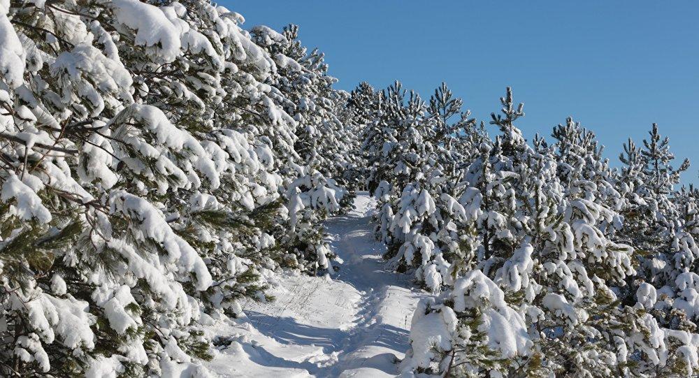 Снег на деревьях в лесу