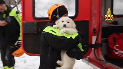 Спасатели нашли щенков в погребенном под лавиной отеле в Италии