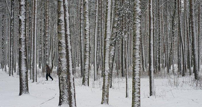Тело девушки, пропавшей в столицеРФ вконце января, найдено вКрасногорском лесопарке