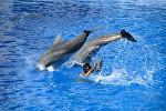 Дельфинарий парка Маринленд