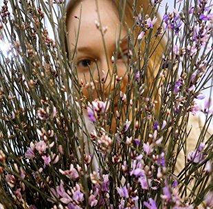 Продажа цветов к празднику 8 марта
