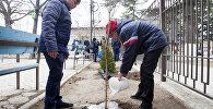 Акция по посадке деревьев