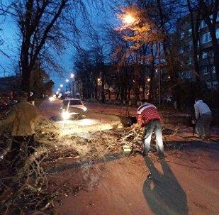 Во Владикавказе устраняют последствия шквалистого ветра