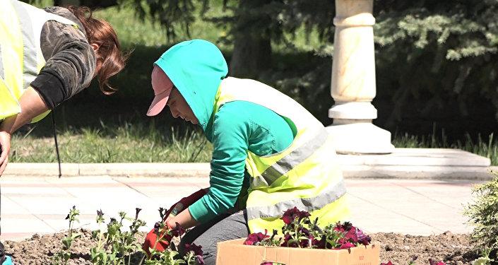 Посадка цветов в Цхинвале