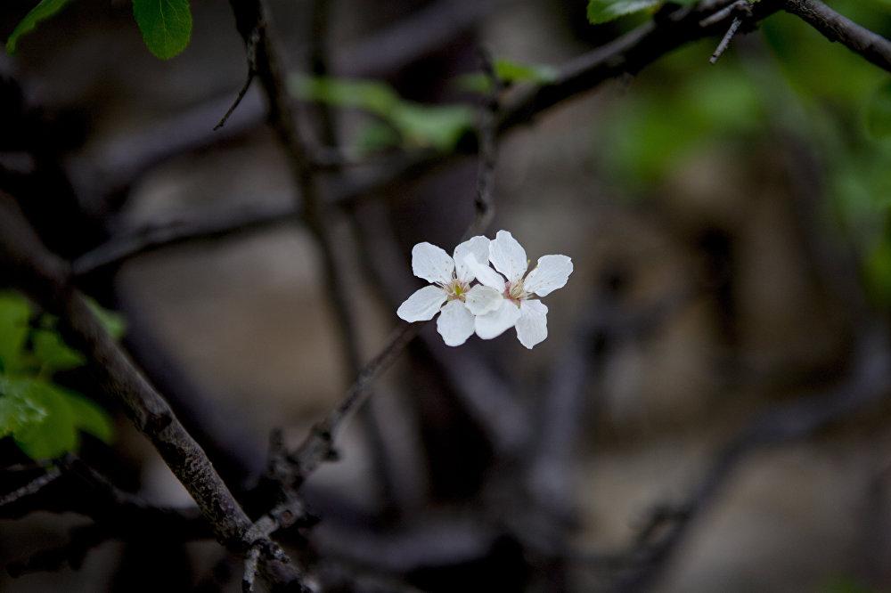 Весна уже вступила в свои права