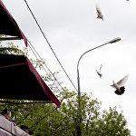 В честь Дня Победы в небо запустили белых голубей