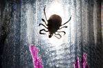 Исследование клещей в паразитологической лаборатории