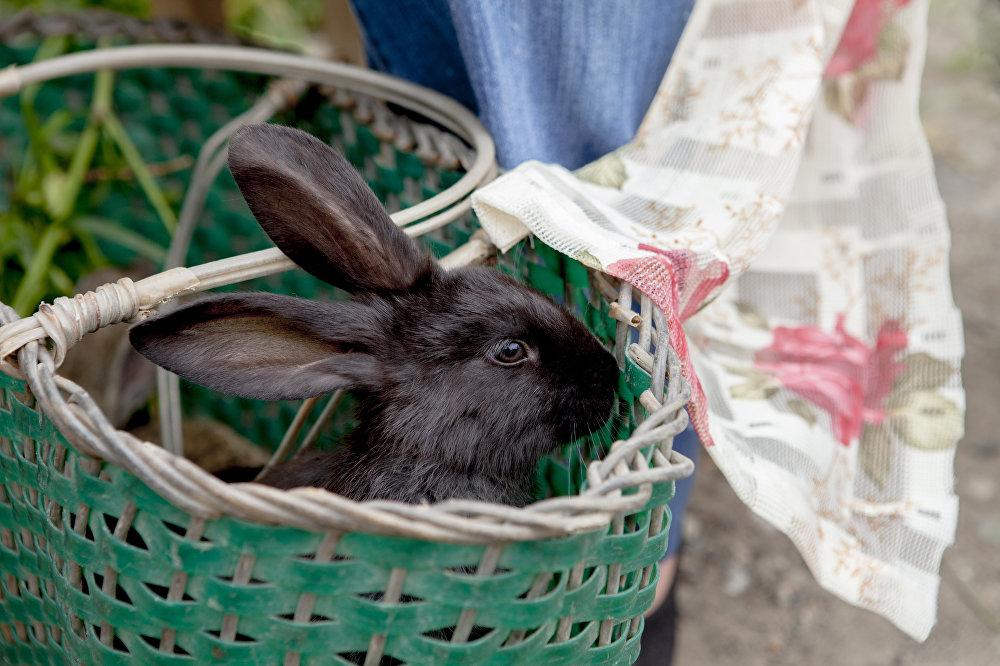 Забавный и очень трогательный кролик