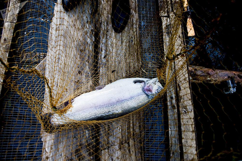 Рыбное хозяйство