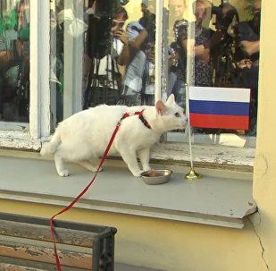 Кот-оракул предсказал РФ первую победу в Кубке конфедераций