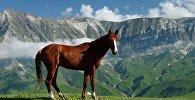 Лошадь в горах