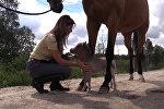 Мини-лошадь по кличке Гулливер