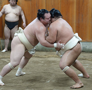 Тренировка борцов спортивной корпорации японского сумо