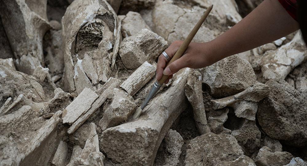 Археологический раскопки в Воронежской области