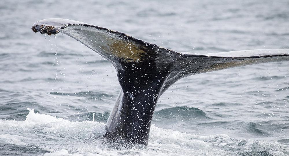 Хвост кита