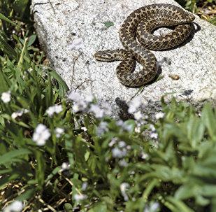 Змея греется на солнце