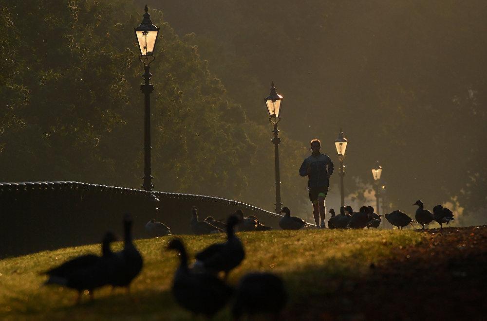 Ранним утром в Гайд-парке в Лондоне, Британия.