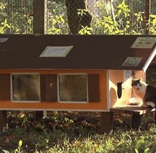 Улица Котиков: как рижанин строит домики для бездомных котов
