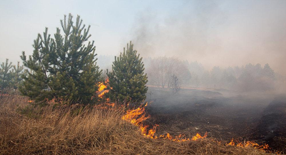 Лесной пожар вЦейском ущелье Северной Осетии потушен