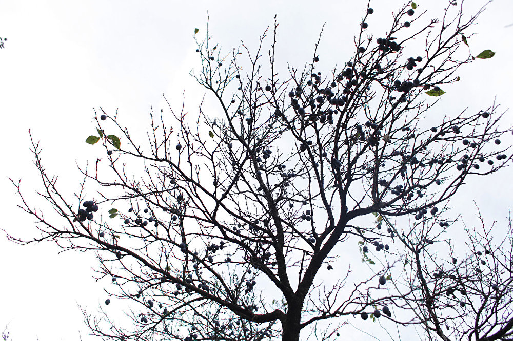 Осень в Фиагдоне