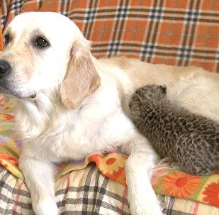 Настоящая мама: собака удочерила детеныша леопарда во Владивостоке