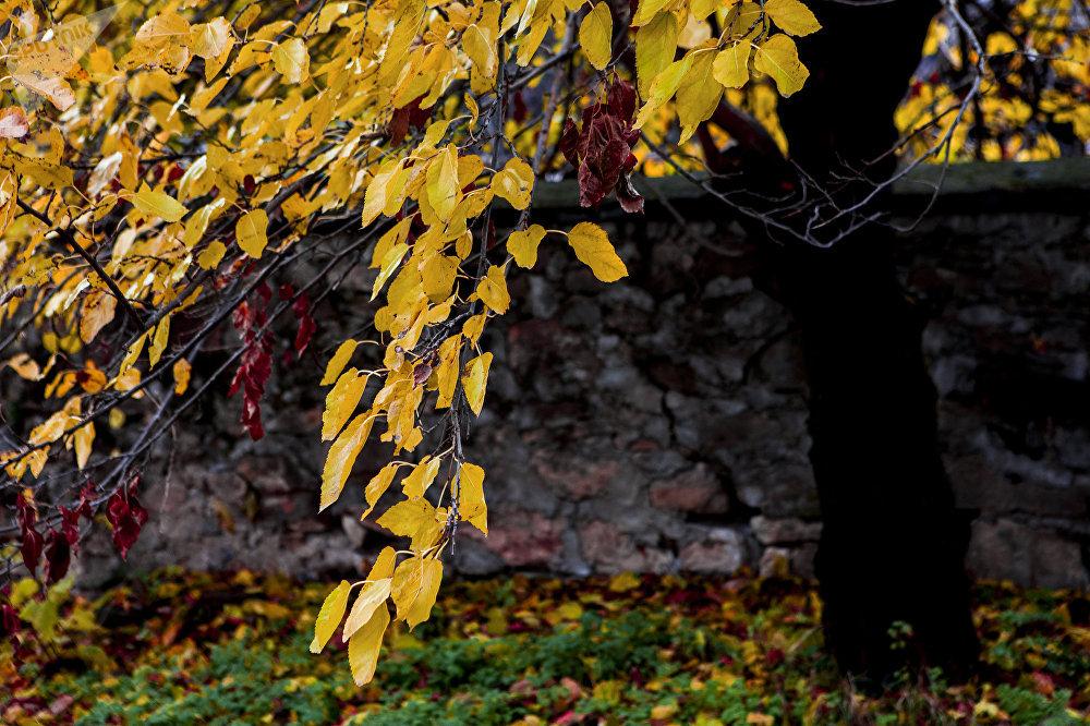 Осетинская осень: зовет и уносит
