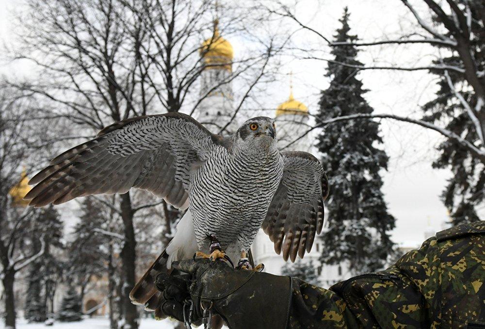 Птицы служат в охране Кремля