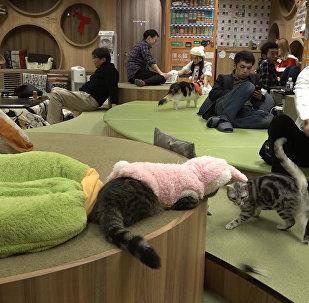 Ужин при котах: как работает ошачье кафе в Японии