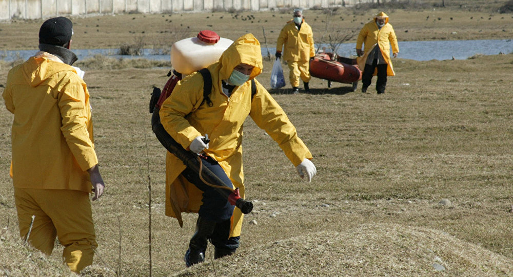 Роспотребнадзор предупредил обопасности птичьего гриппа вЕС