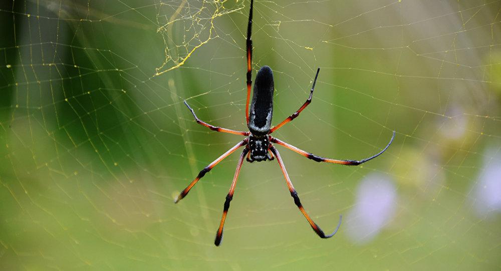 Размещено видео смертельной схватки паука ишершня
