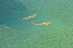 Акулы в окружении мелкой рыбы