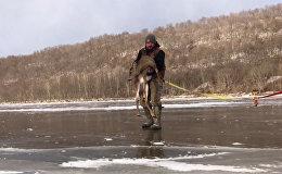 Спасение оленя, застрявшего на замерзшей реке