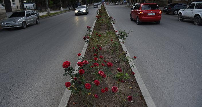 Цхинвал. Улица Алана Джиоева.