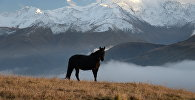 Лошадь на горном лугу
