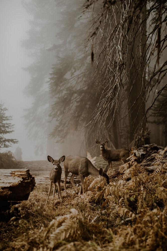 Снимок An unexpected meeting польского фотографа Justyna Zduńczyk из категории Wildlife (Open), вошедший в шортлист фотоконкурса 2018 Sony World Photography Awards