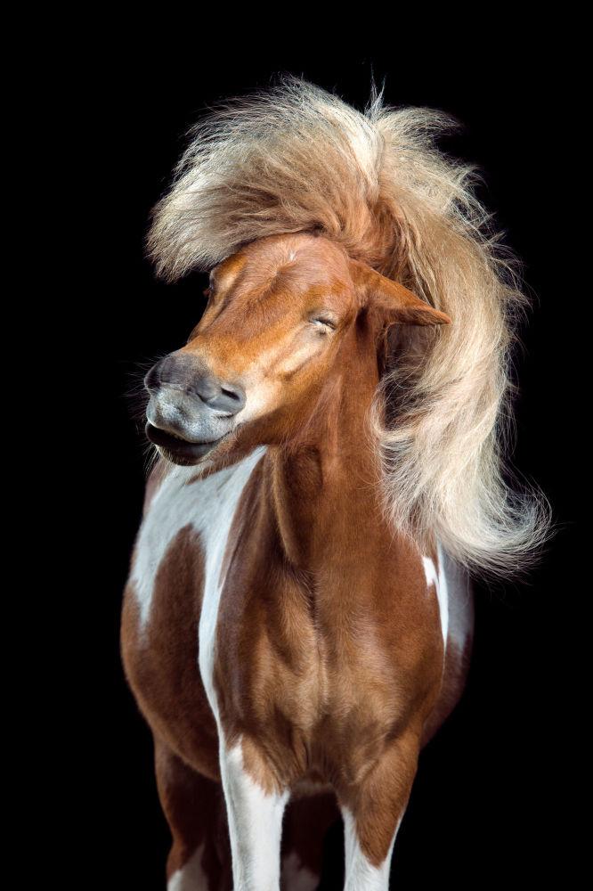 Снимок из серии Horsestyle немецкого фотографа Wiebke Haas из категории Natural World & Wildlife (Professional), вошедший в шортлист фотоконкурса 2018 Sony World Photography Awards
